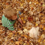 Our Five Favorite Things About Fall