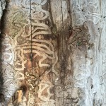 Emerald Ash Borer: Foreign Agent